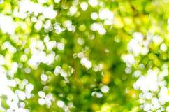 Естественное bokeh outdoors в зеленых и желтых тонах стоковые изображения rf