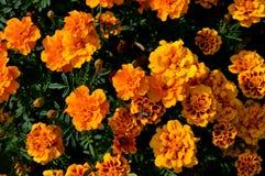 Естественное flowers… желтого цвета лета цветет состав в парке города Стоковые Изображения