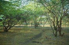 Естественное Scanes Стоковая Фотография RF