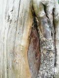Естественно деревянное искусство стоковые фото
