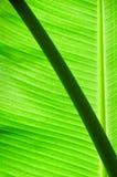 Естественно зеленый цвет Стоковая Фотография RF