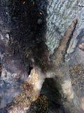 естественно Стоковое фото RF