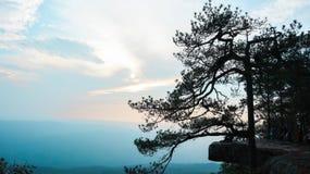 Естественные ветви в туманном небе к естественному миру стоковая фотография rf