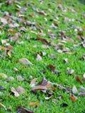 Естественные высушенные листья листают падающ на пол сада или джунглей Стоковые Фотографии RF