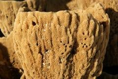 Естественные губки ванны Стоковая Фотография