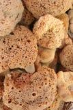 естественные губки Стоковые Фотографии RF