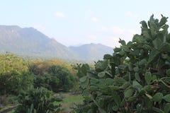 Естественные деревья Dambulla Шри-Ланка стоковые изображения