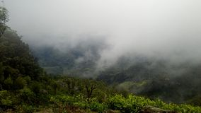 Естественные джунгли Шри-Ланка Стоковое фото RF