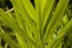 Естественные листья, лекарственные растения Стоковое Фото