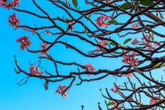 Естественные листья зеленого цвета на предпосылке неба Стоковая Фотография