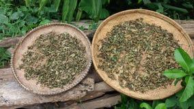 Естественные лист зеленого чая сухие Стоковое фото RF