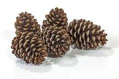 5 естественные картины и текстур конуса сосны Брайна Стоковое фото RF
