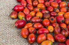 Естественные картины плода шиповника высушенные на деревянных полах, изображения плода шиповника высушенные для того чтобы сделат Стоковые Фотографии RF