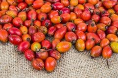 Естественные картины плода шиповника высушенные на деревянных полах, изображения плода шиповника высушенные для того чтобы сделат Стоковая Фотография