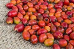 Естественные картины плода шиповника высушенные на деревянных полах, изображения плода шиповника высушенные для того чтобы сделат Стоковое Изображение RF