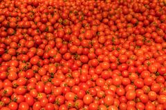 Естественные овощи на счетчике рынка Томаты вишни небольшие стоковое фото rf