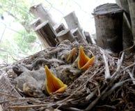 Естественные птицы Стоковое фото RF