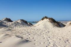 Естественные, старые и защищенные песчанные дюны на атлантическом португальском западном побережье Стоковые Фото