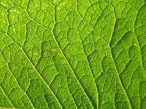 естественные текстуры Стоковая Фотография RF