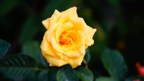 Естественные цветки стоковое фото rf