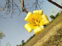 Естественные цветки Стоковое Изображение RF