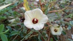 Естественные цветки 1 Стоковые Изображения