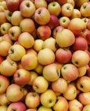 Естественные яблоки стоковое изображение