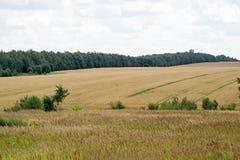 Естественный ландшафт аграрного поля Стоковые Изображения
