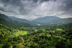Естественный ландшафт в плантациях чая Стоковые Изображения RF