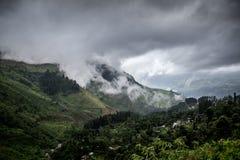 Естественный ландшафт в плантациях чая Стоковая Фотография RF