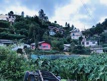 Естественный взгляд в Nuwara Eliya, Шри-Ланке Стоковые Изображения