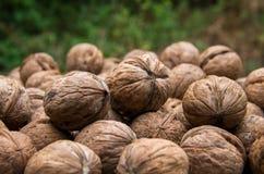 Естественный грецкий орех в раковине Стоковые Фотографии RF