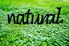 Естественный - деревянное слово установленное в зеленый клевер Стоковое фото RF