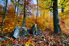 Естественный лес в осени, падении Стоковые Фото
