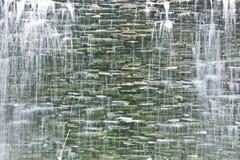 Естественный лес. Стоковое Фото