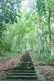 Естественный лес. Стоковые Фотографии RF