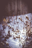 Естественный завод в снеге Стоковые Изображения