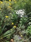 Естественный засаживать сада стоковые фотографии rf
