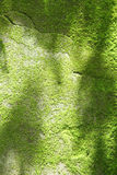 Естественный зеленый мох Стоковые Изображения RF