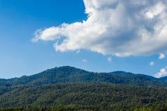 Естественный зеленый цвет ландшафта на предпосылке неба Стоковая Фотография RF