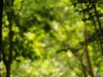 Естественный зеленый цвет выходит предпосылка Стоковые Фото