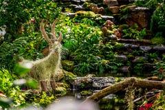 Естественный имитационный благоустраивать используя тропические заводы Стоковое Изображение RF