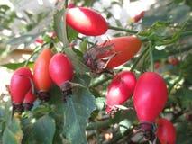 Естественный источник витаминов стоковое фото