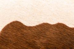Естественный конец вверх по текстуре меха коровы Стоковые Фото