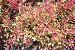 Естественный красочный завод Стоковое фото RF