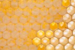Естественный крупный план сота фотография клеток меда Стоковое Изображение