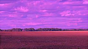 Естественный ландшафт фильтр ультрафиолетова pantone †поля лета « сток-видео