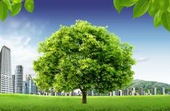 Естественный ландшафт. экологическая принципиальная схема Стоковая Фотография