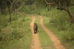 Естественный момент от леса стоковые изображения