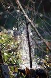 Естественный небоскреб spiderweb архитектора Стоковые Фото